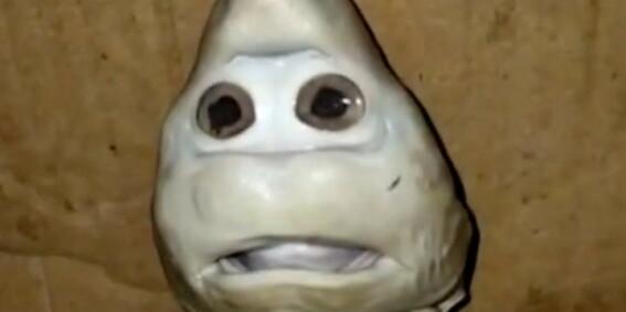 Image: Sjekk ut denne haien
