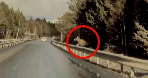 Image: Ser elgen, så svinger han