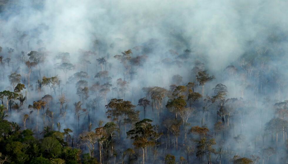 AVSKOGING: I raskt økende tempo hogges Amazonas-regnskogen i Brasil ned og brennes for å rydde rom for jordbruk. Foto: AFP/NTB.