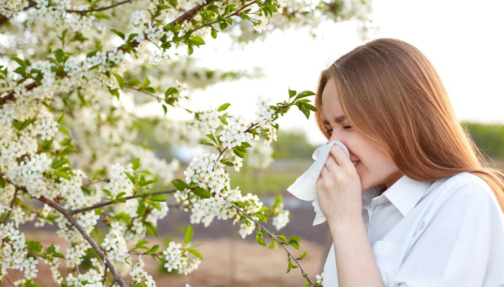 POLLENSESONG: Det kan bli mye snufsing, hosting og nysing under pollensesongen. Illustrasjonsfoto: Shutterstock / NTB Scanpix