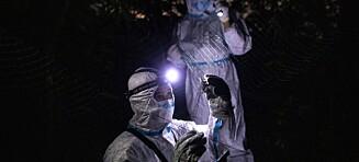 Jakter nye dødsvirus