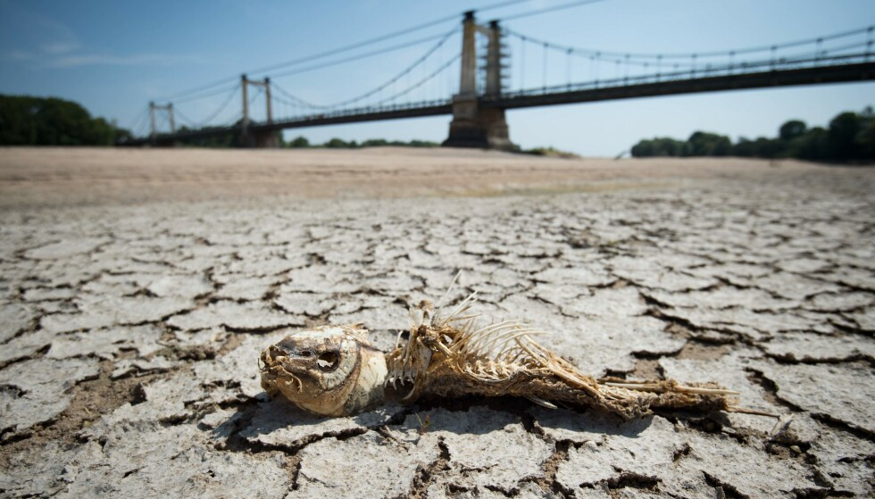 HETEBØLGE: Elva Montjean-sur-Loire i Frankrike tørket nesten helt inn sommeren 2019 etter en langvarig hetebølge og lite nedbør. Foto: AFP/NTB.
