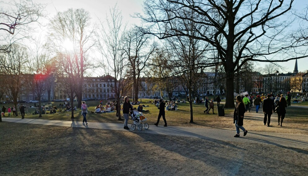 AVSTAND: Det var stort sett god avstand mellom klyngene med folk i Sofienbergparken i Oslo lørdag. Foto: Brage Lie Jor / Dagbladet