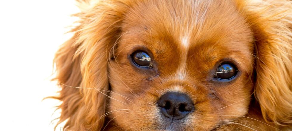 Så mye koster hunden deg … egentlig