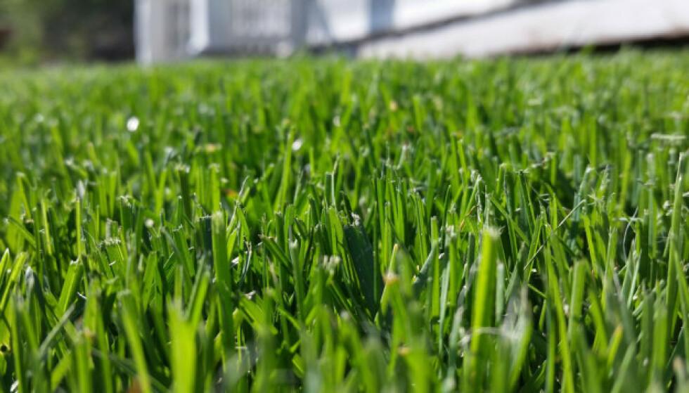 SPIRENDE: Gresset har begynt å gro, og det er på tide å komme i gang med de gode klipperutinene!