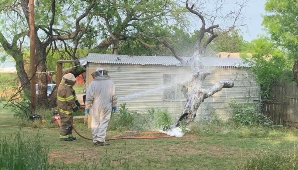 BRUKTE SKUM: For å få kontroll over bikuben brukte brannvesenet skum. De fikk også hjelp av en lokal birøkter. Foto: Calvin Chaney / Breckenrigde Fire Department