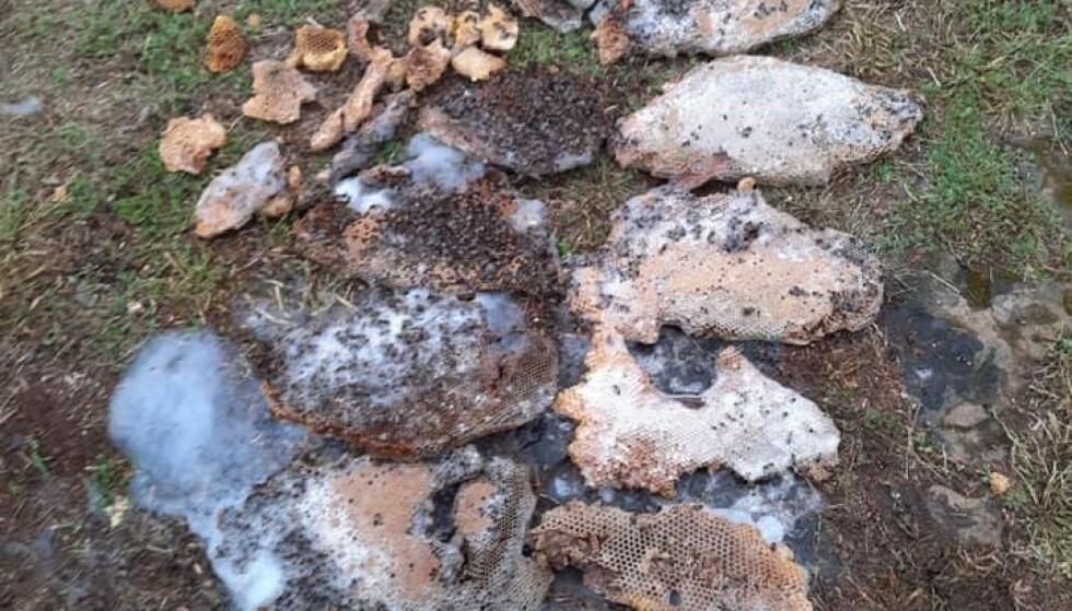STOR KUBE: Slik så bikuben der biene bodde etter at brannvesenet hadde fått ødelagt den. Foto: Calvin Chaney / Breckenrigde Fire Department