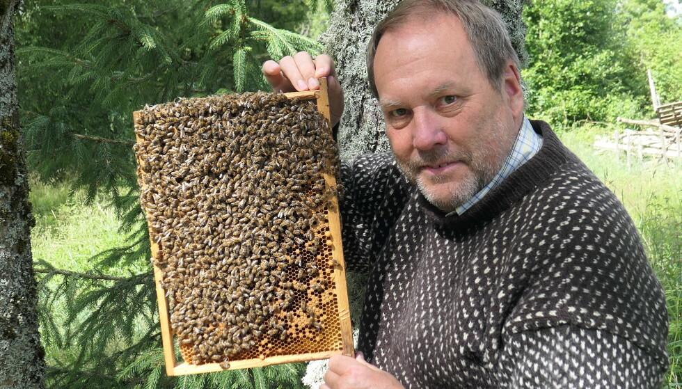 Meestal niet gevaarlijk: imker Roar Rey Kirkwald zegt dat bijen in Noorwegen niet gevaarlijk zijn, zolang je maar respect voor ze toont en ze met rust laat.  - Hij zegt dat bijen zich niet eens druk maken om luie mensen die niet eens kunnen vliegen.  Foto: Odd Gjermundrød