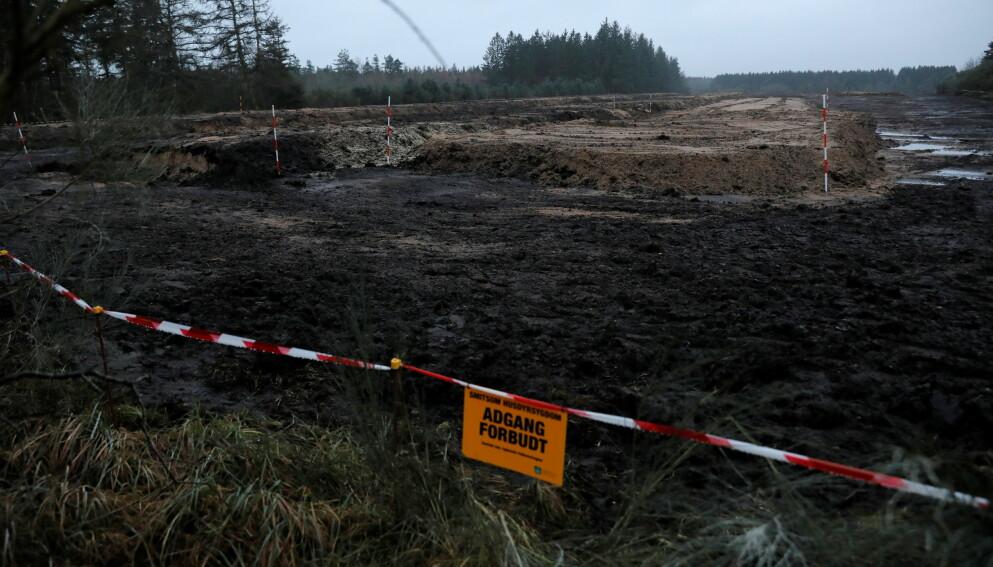 STINKMINK: Nedgravd og råtnende mink har vist seg å lukte vondt i Danmark. Foto: Andrew Kelly / Reuters / NTB