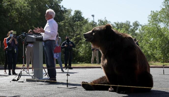 «SIRKUSFASEN»: Valget i California har kommet inn i «sirkusfasen», skriver New York Times. Foto: Justin Sullivan / Getty Images / AFP / NTB