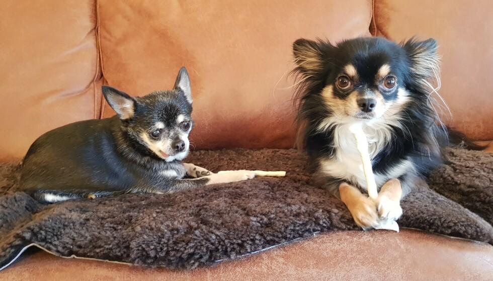 TO GODE VENNER: Hundene Alma (t.v) og Brownie (t.h) koste seg alltid i lag sammen. - Almas liv ble også totalt endret på grunn av den brunostbiten, sier eier.