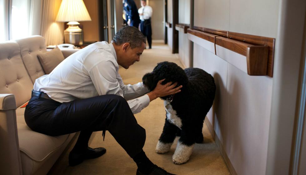 MISTET HUNDEN: Barack Obama og familien har mistet hunden sin Bo. Foto: NTB / Photo by REX