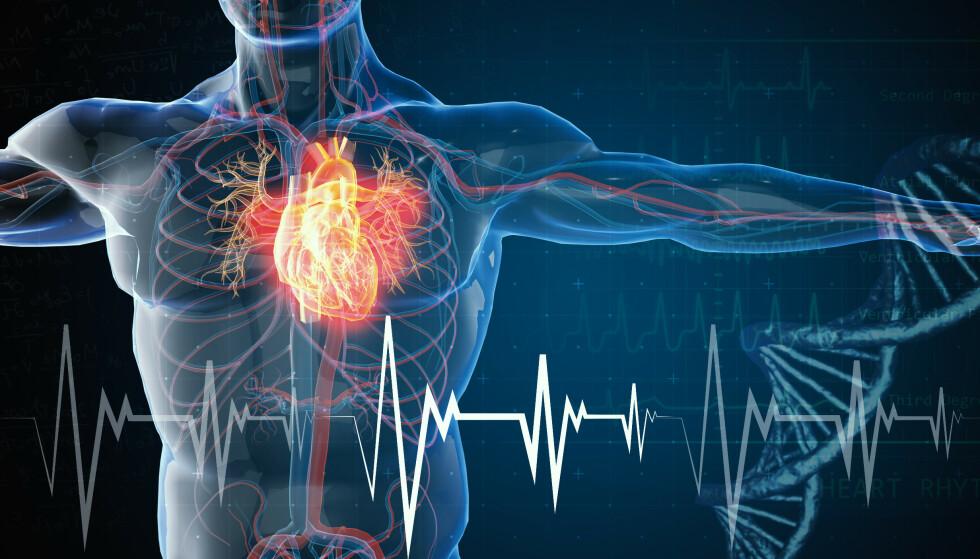 HJERTESVIKT: En ny studie knytter en spesiell fett-type opp mot risiko for hjertesvikt. Foto: Shutterstock