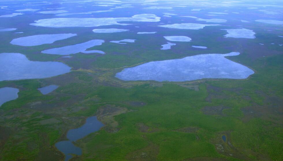 FUNN: Det er i dette området, nord-øst i Sibir, at forskerne har funnet den lille marken. Dette bildet er fra 2007. Foto: Dmitry Solovyov / Reuters / NTB