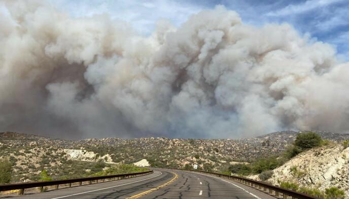 GRESSBRANN: Arizona har vært rammet av flere alvorlige gressbranner den siste tida. Her fra 7. juni. Foto: Arizona Department of Forestry and Fire Management / Reuters / NTB