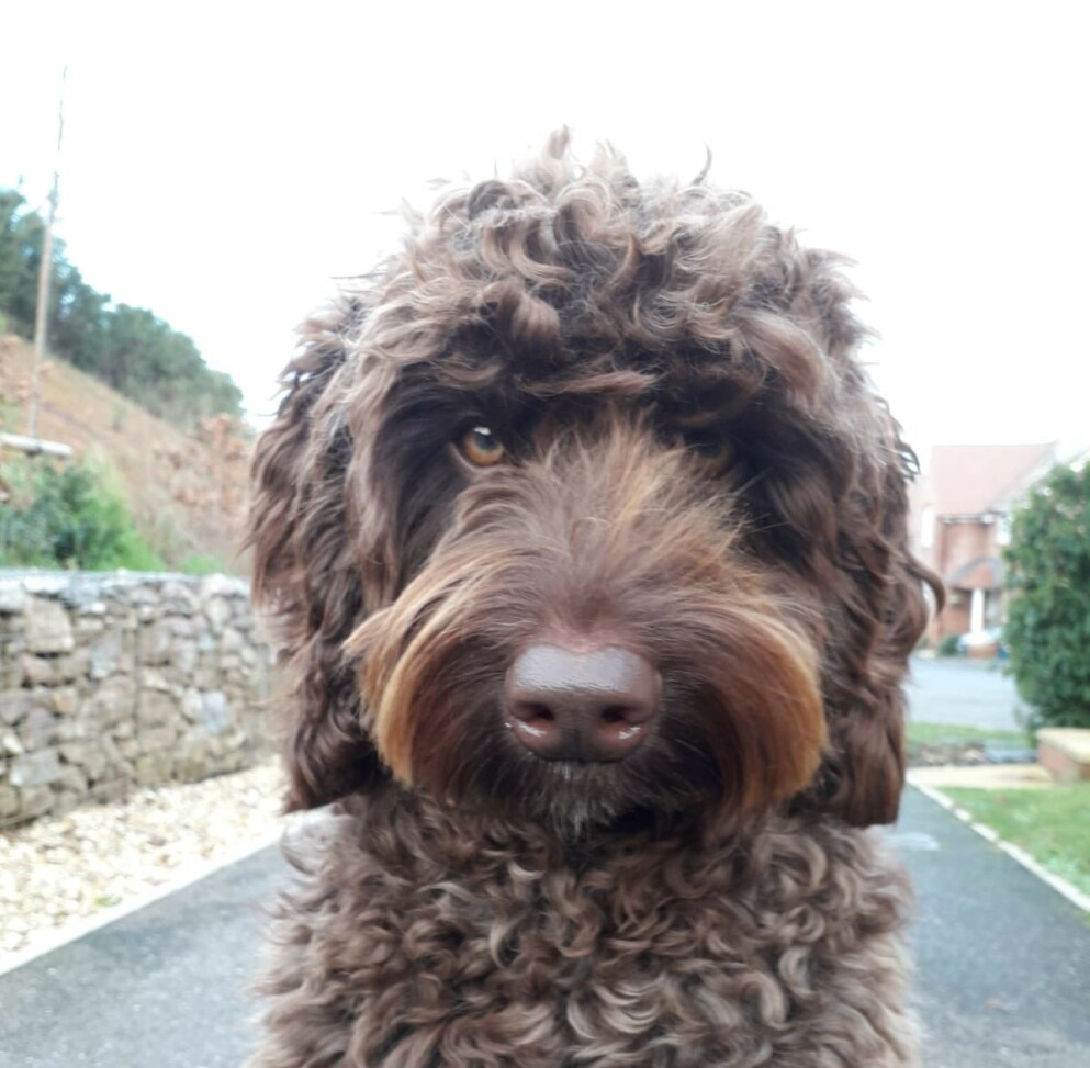DIGBY: Hunden Digby har tidligere vært terapihund for redningsmanskap som har blitt utsatt for traumer. Foto: Devon and Somerset Fire and Rescue Service
