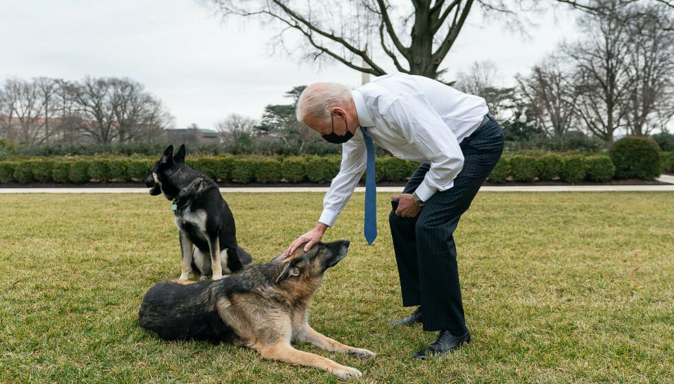 HUNDER I DET HVITE HUS: USAs 46. president Joe Biden og hans to trofaste schæferhunder, Champ og Major. Foto: Adam Schultz / The White House / Polaris / NTB