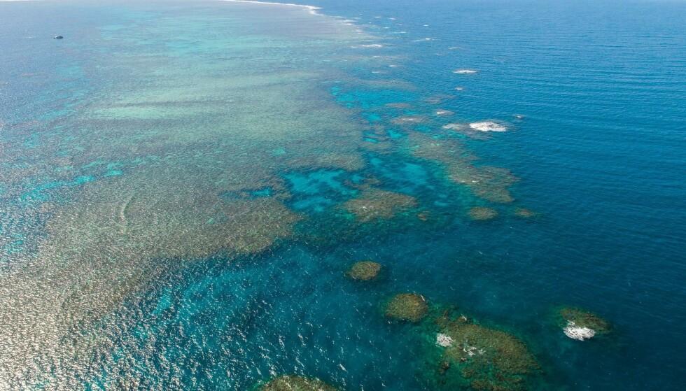 UTSATT: Great Barrier Reef utenfor Australia er verdens største korallrev. Nå planlegger FN å sette stedet på lista over steder som er i fare. Foto: CHINE NOUVELLE/SIPA/Shutterstock