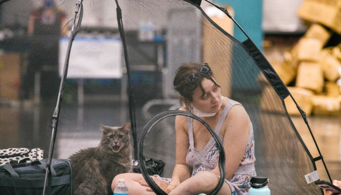 Cool: A woman who lives in Portland, USA, and her cat may come to visit to cool off.  Record heat is also raging on the west coast of the United States.  Photo: Katherine Elsezer / AFP / NDP