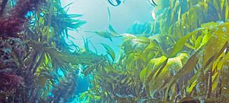 Økosystemene i havet kollapser