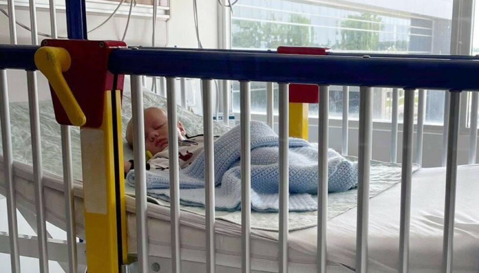 BLE SMITTET: 6 uker gamle Beau i Ilinois, USA, ble smittet av viruset som nå sprer seg utenfor sesongtid. Foto: LaRanda St. John via AP / NTB