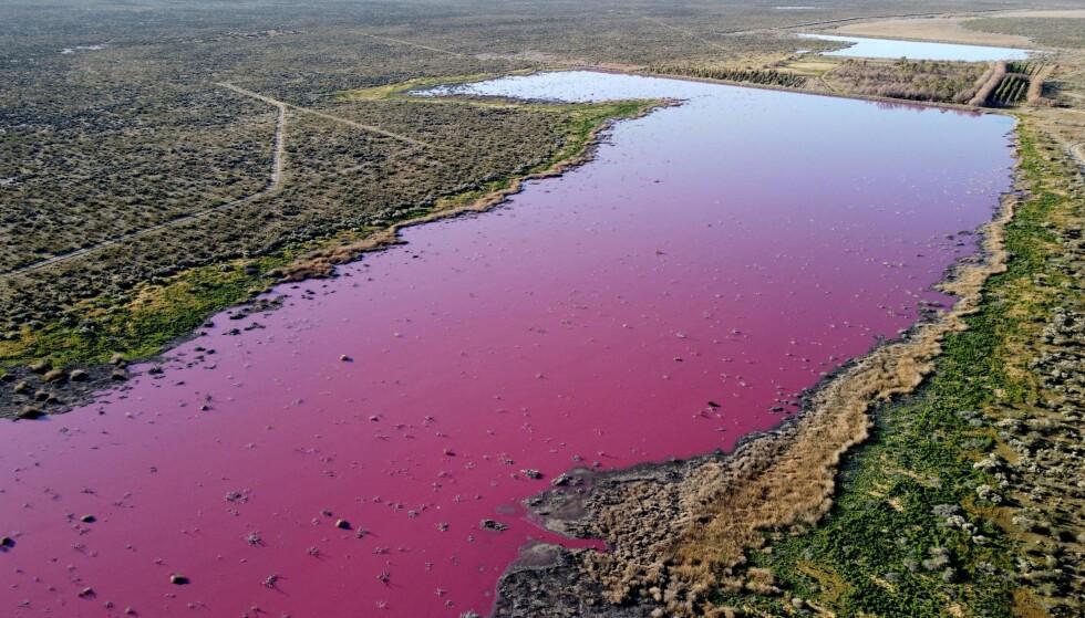 AVFALL: Det er avfall fra fiskefabrikker som er årsaken til den rosa fargen. Foto: Dianel Feldman / AFP / NTB