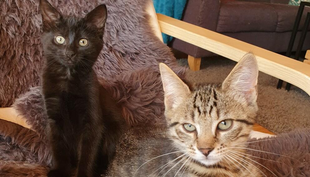 KOMPIS OG PUSA: De to kattungene Kompis og Pusa ble funnet døde med mistenklige skader i en veikant 400 meter fra hjemmet sitt. Foto: Privat.