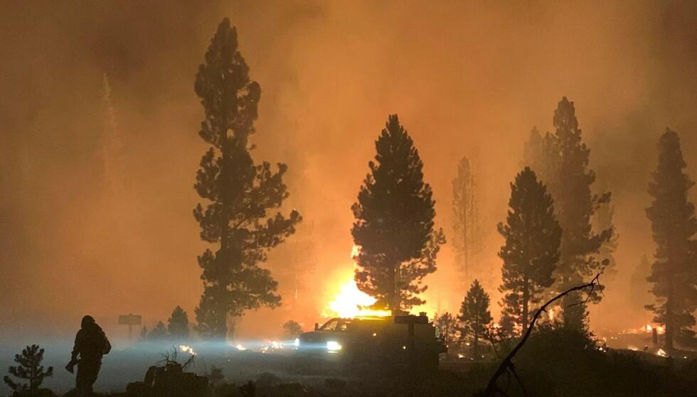 SKOGBRANNER: Med tørke og ekstrem varme, kommer skogbrannfare. Over 2000 brannkonstabler kjempet mot flammene i Oregon i midten av juli. Foto: AFP / NTB