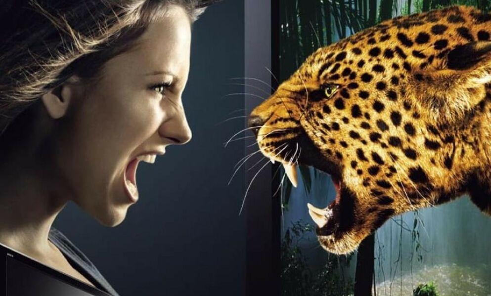 ANGREP: Dette er ifølge Bild leoparden Troja (16) i en TV-reklame fra 2013. Tirsdag skal han ha angrepet en 36 år gammel kvinne. Det er ikke kvinnen på bildet ble angrepet. Foto: Panasonic