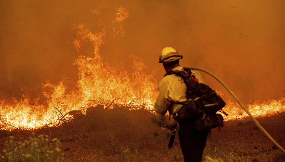 KREVENDE: Slokkingen av de enorme brannene i California beskrives som svært krevende. Sterk vind gjør ikke arbeidet enklere. Foto: Noah Berger / AFP / NTB