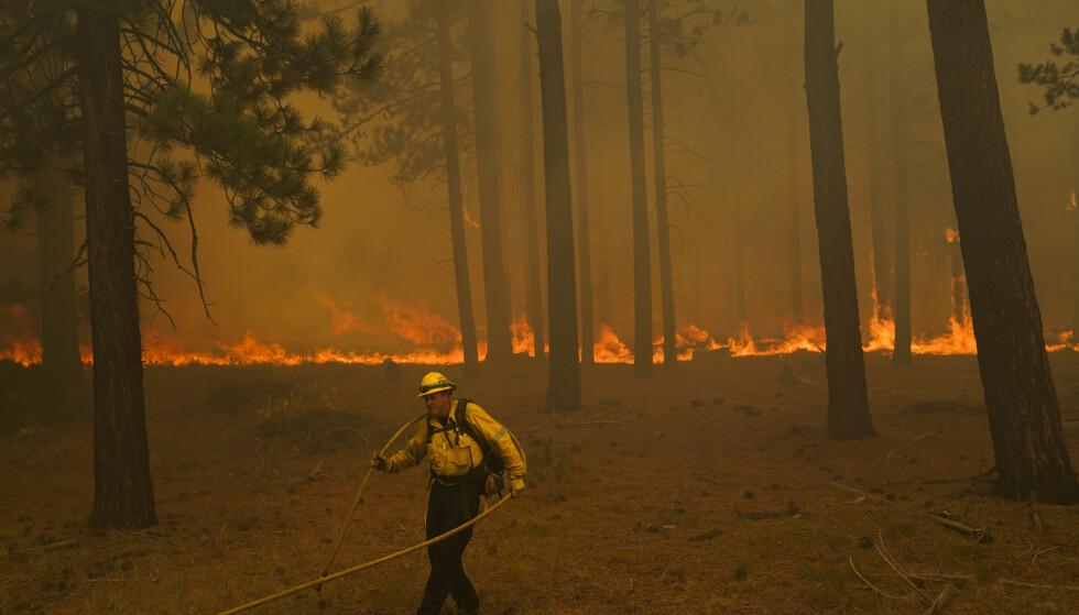 STENGER: Den amerikanske skogstjenesten kunngjorde i går at alle nasjonalskoger i California stenges som følge av skogbrannene. Foto: Jae C. Hong / AP / NTB