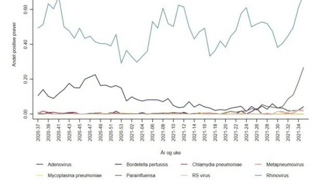 LUFTVEISINFEKSJONER: Grafen viser spredning av luftveisinfeksjoner det siste året. RS-virus (lysegrå) ligger foreløpig lavt, mens rhinovirus og parainfluensa er stigende. Illustrasjon: FHI