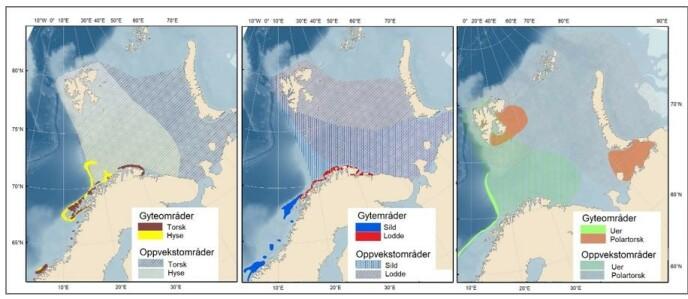 Kartet viser hovedgyteområder og oppvekstområder for kommersielt og økologisk viktige fiskearter (torsk, hyse, sild, lodde, uer og polartorsk). Kilde – HI bestandskart.