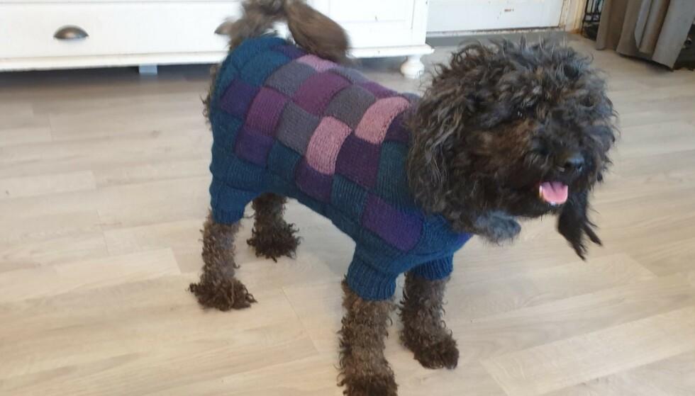 FÅTT GENSER: Hunden Hedda skal ha blitt veldig glad da matmor stikket en genser til henne, etter at pelsen ble klippet av. Foto: Privat