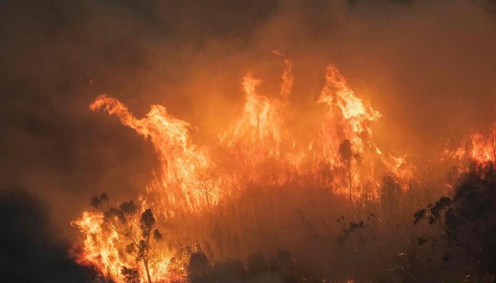 VOLDSOMME: Skogbrannene er estimert å ha tatt livet av tre milliarder dyr. Foto: AFP / STATE GOVERNMENT OF VICTORIA / NTB