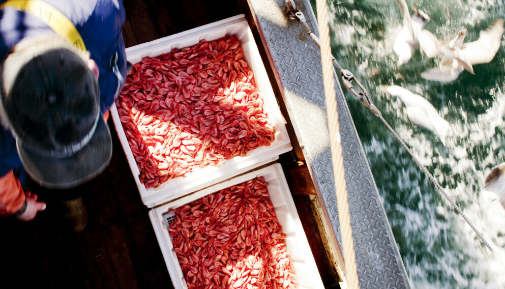 BÆREKRAFT: Fiskerne ønsker, trolig mer enn noen andre, en rik og ren fjord. Fiskerne i Oslofjorden godtok i 2009 at store områder i Ytre Hvaler Nasjonalpark skulle fredes for tråling for videre forskning, skriver innsenderne. Foto av rekefiske ved Hvaler i 2009: Tore Meek / NTB