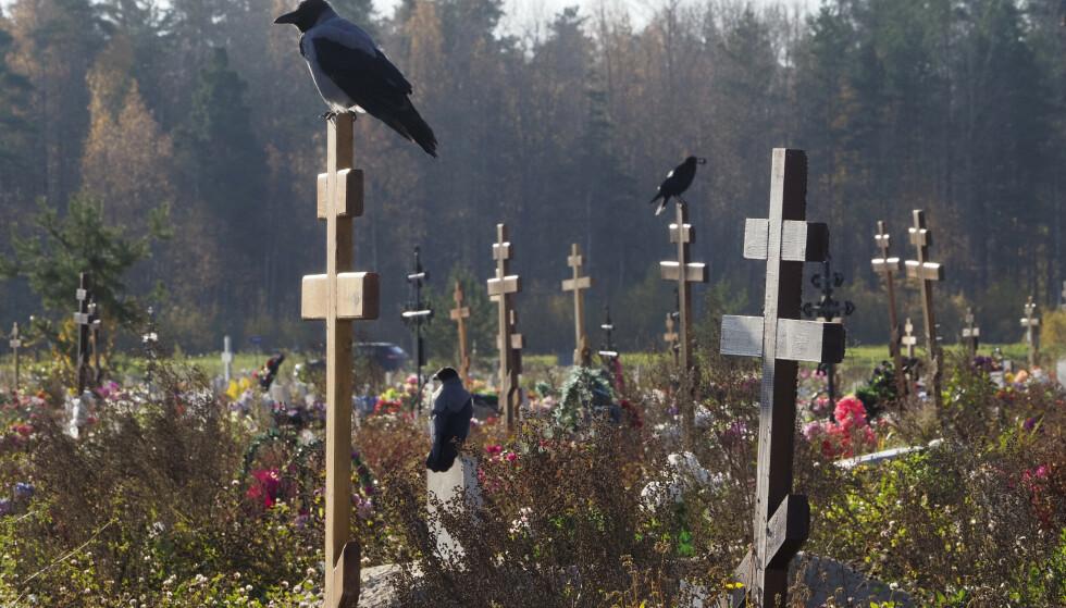 MANGE DØR: Corona-dødstallene i Russland er svært høye for øyeblikket. På bildet ser vi kråker som sitter på gravkors, ved en kirkegård reservert for mennesker som har mistet livet, som følge av coronavirus i Kolpino, utenfor St. Petersburg Foto: AP Photo/Dmitri Lovetsky