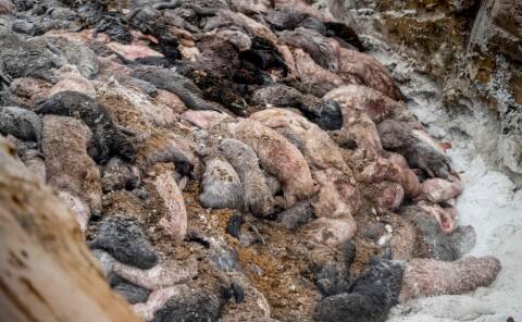 Image: Presses opp av massegravene