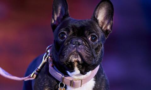 Image: Hunden Havanas vonde hemmelighet