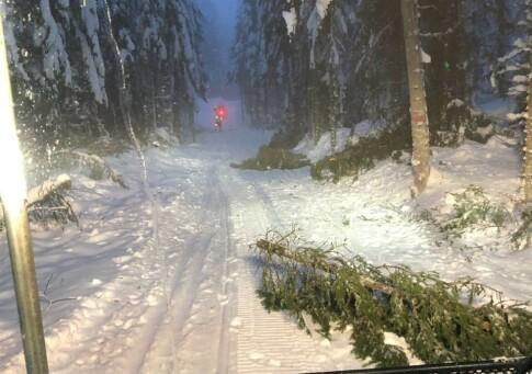 Image: Skiforeningen: Pass opp for fallende trær