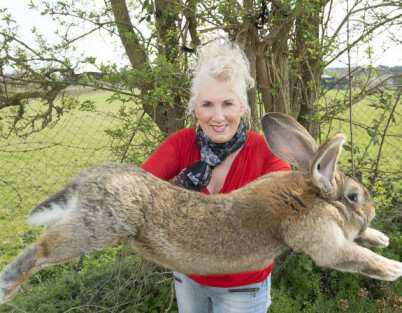 Image: «Verdens største kanin» stjålet
