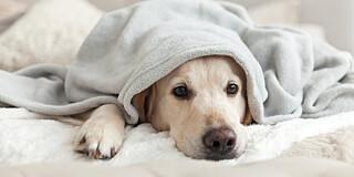 Image: - Disse hundeeierne bør være ekstra forsiktige